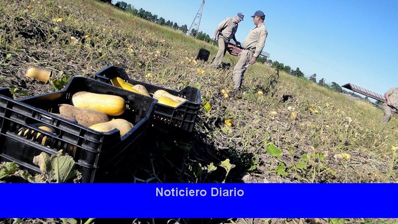 Entidades de pequeños productores lanzan la Mesa Agroalimentaria Argentina