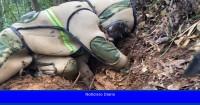 Así se destruyen los nidos de los avispones asesinos gigantes