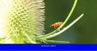 ¿Cuál es el motivo de la desaparición de insectos en las ciudades?