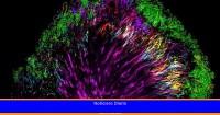 ¿Cuáles son las funciones de los microbios?