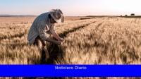 Destaca el aumento del cultivo de trigo y maíz en la región núcleo en los últimos años.