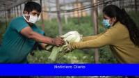 El consumo de hortalizas agroecológicas creció durante la pandemia