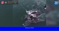 El increíble video de dos ballenas 'abrazándose' en medio del océano
