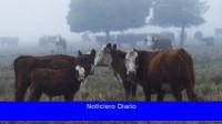 La Cámara de Exportadores cuestionó el nuevo esquema de exportación de carne