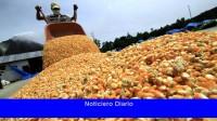 La cosecha de cereales crecería un 7,2% hasta los 129,8 millones de toneladas