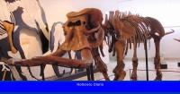 La extraña historia evolutiva de un mamífero gigante que evolucionó hacia el enanismo