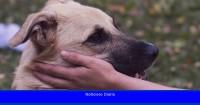 Los dueños de perros prefieren a sus mascotas a las personas después de la pandemia, encuentra un estudio