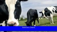 Oficializaron la expansión de las exportaciones de carne vacuna a China a 140.000 cabezas