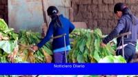 Preparan un sistema de geolocalización para el trabajo infantil en la agricultura porteña